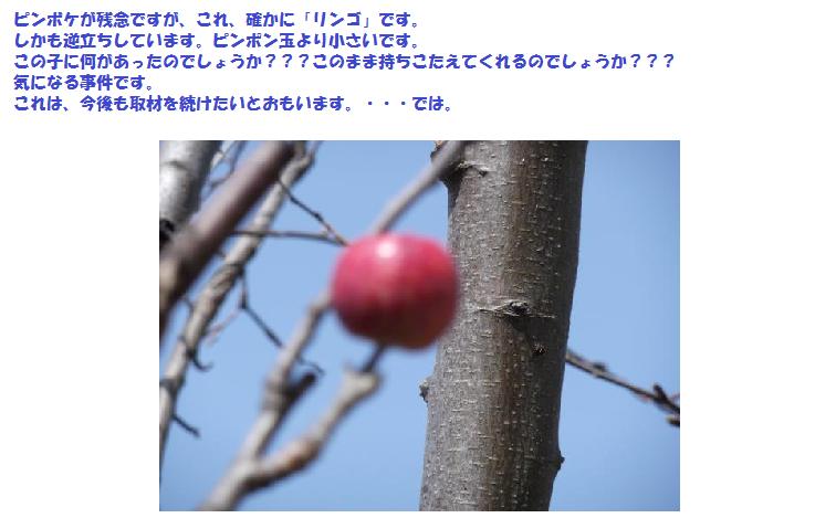 リンゴの木③