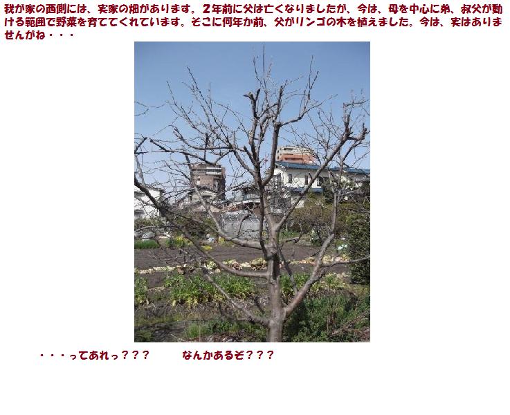 リンゴの木①