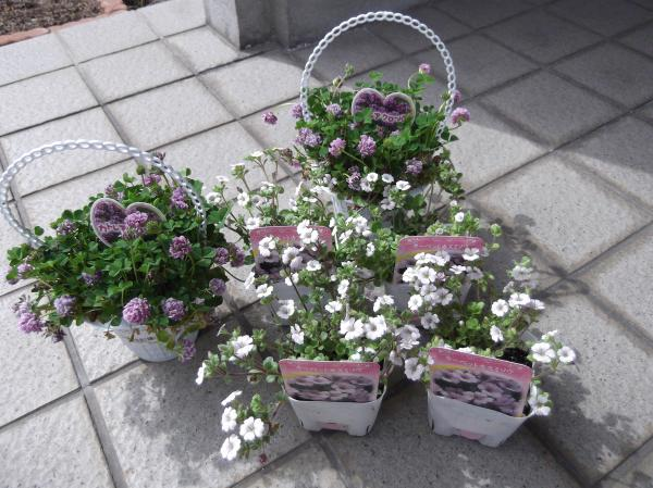 2012年4月15日コーナンで購入お花