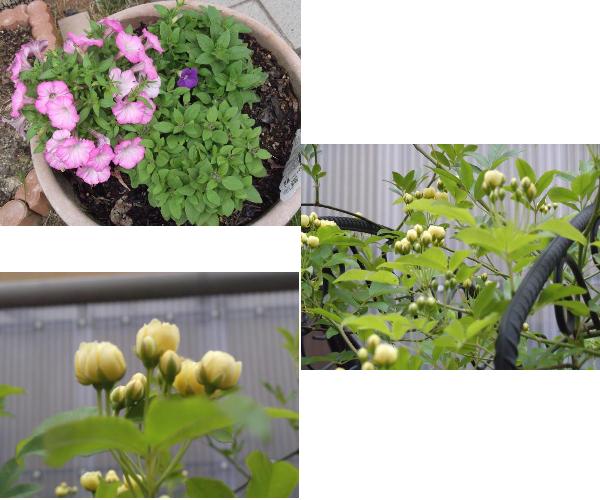 2012年4月26日今日の花