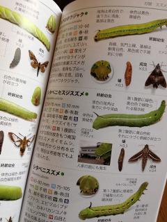 イモムシハンドブック 2