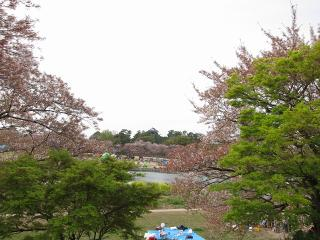 岡崎桜まつり