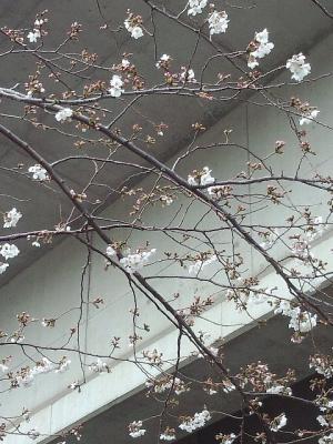 春が来た01