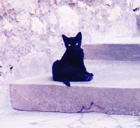 黒猫200