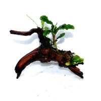 ブセ流木2