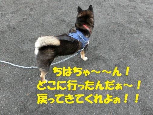 20130310-12.jpg