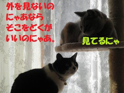 20130317-3.jpg