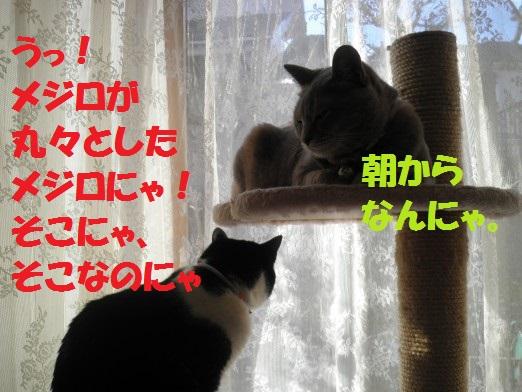 20130317-4.jpg