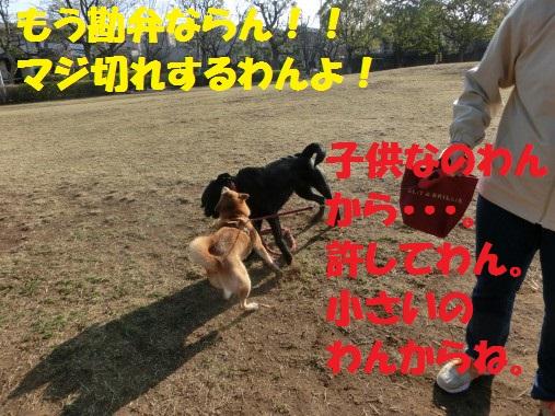 20130323-006.jpg