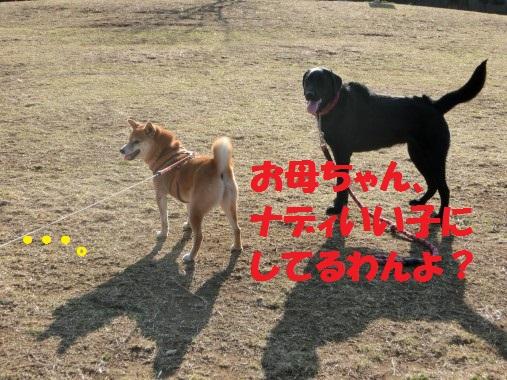 20130323-009.jpg