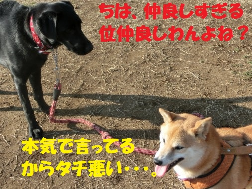 20130323-011.jpg