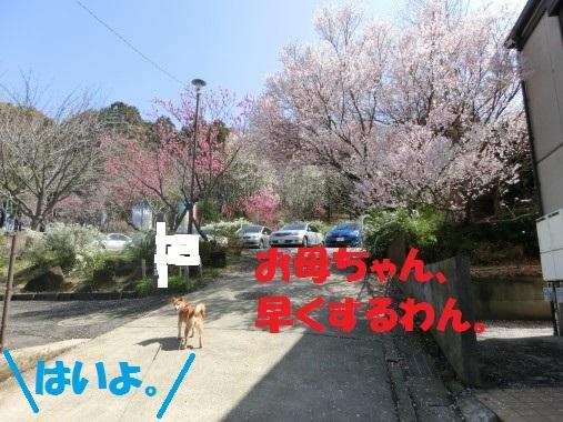 20130325-1.jpg