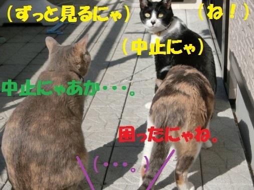 20130328-12.jpg