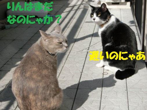 20130328-3.jpg