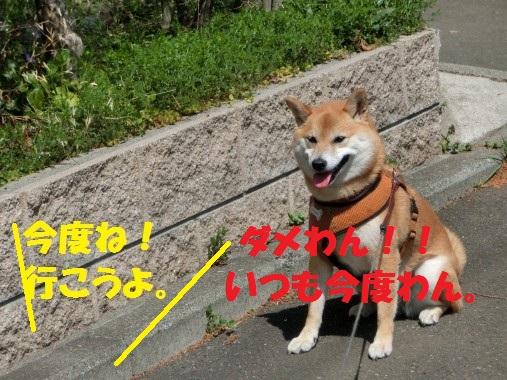 20130401-7.jpg