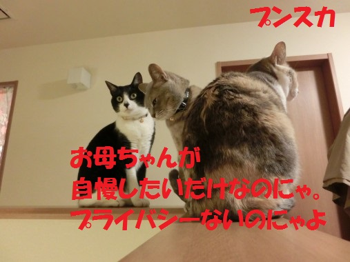 20130424-6.jpg