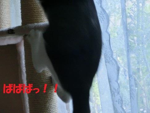 20130522-7.jpg