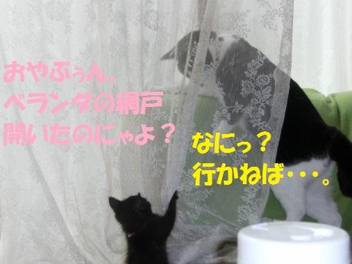20130608-13.jpg