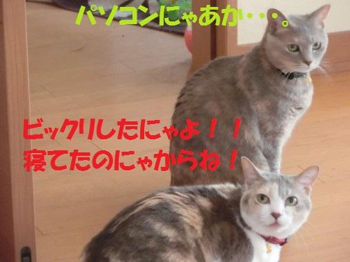 20130611-9.jpg