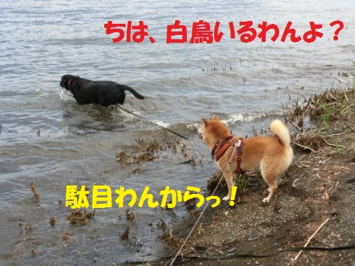 20130614-11.jpg