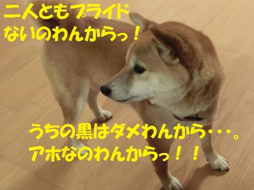 20130617-12.jpg