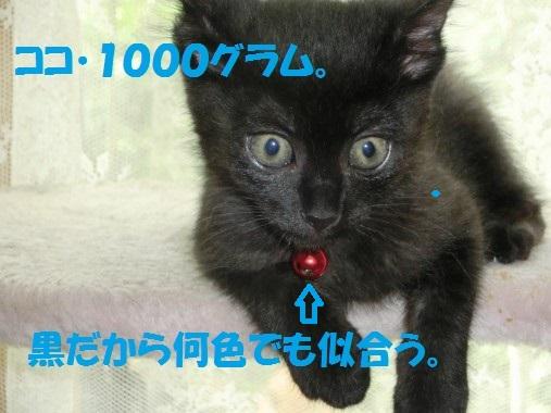 20130617-2.jpg