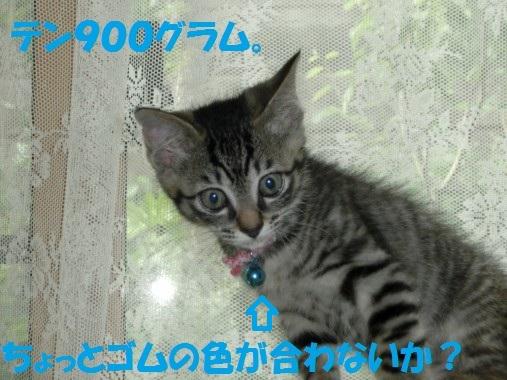 20130617-3.jpg