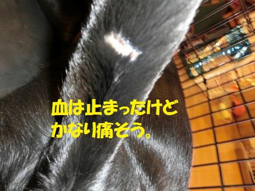 20130619-2.jpg