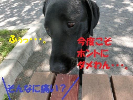 20130619-9.jpg