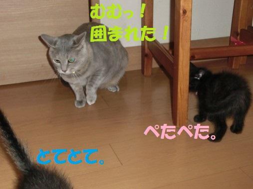 20130620-9.jpg