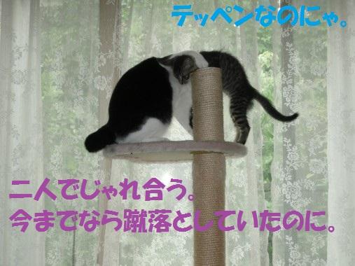 20130624-6.jpg