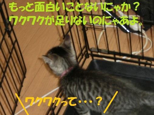 20130708-15.jpg