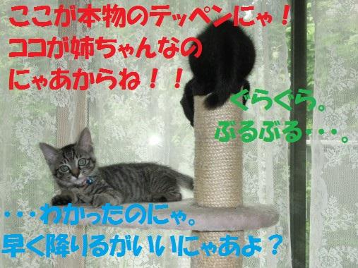 20130710-10.jpg