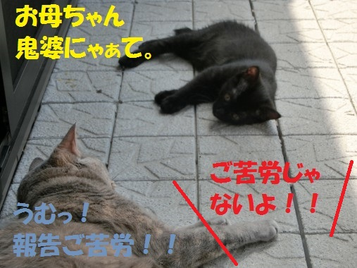 20130711-009.jpg