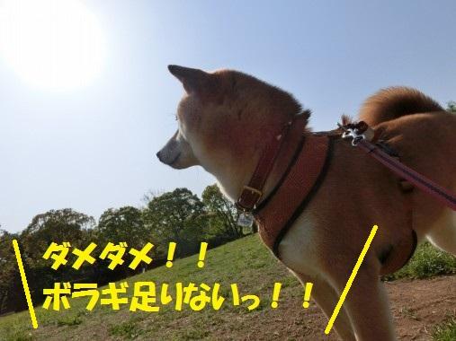 20130715-003.jpg