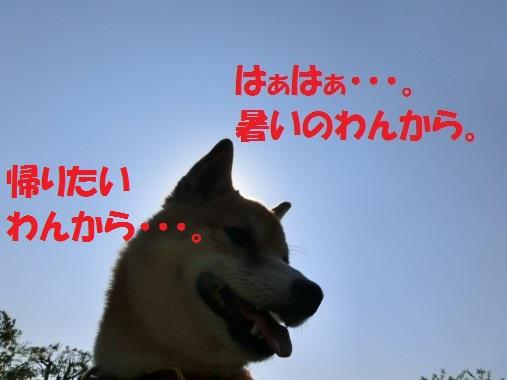 20130715-006.jpg
