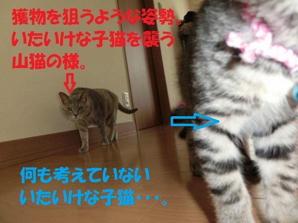 20130730-0002.jpg