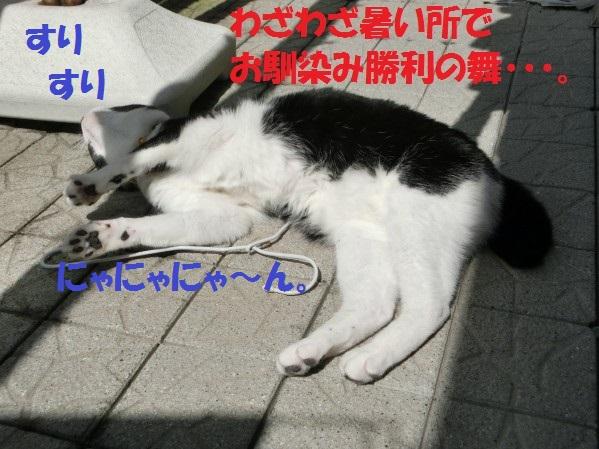 20130731-0001.jpg