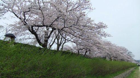 半木の道 (2)