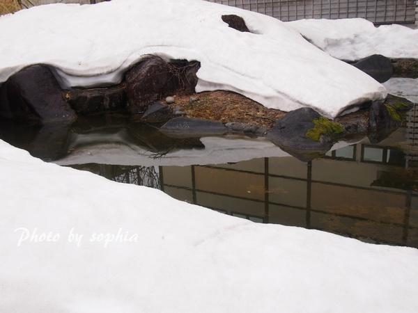 牧之記念館の池