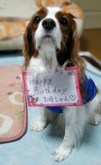 誕生日お出迎え犬14012