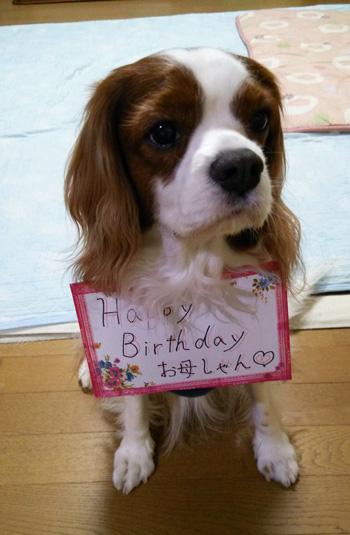 誕生日お出迎え犬14011
