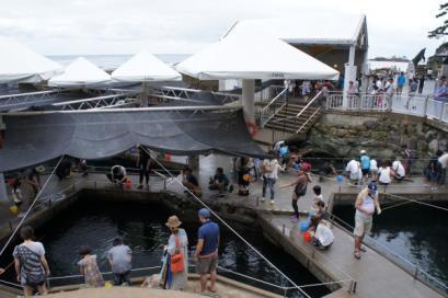 城崎マリンワールド名物 アジ釣り。釣った味をその場で食べることができます