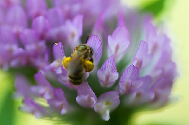 黄色いのは花粉?
