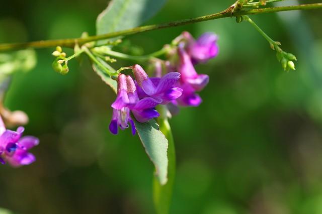花の色が、美しい!