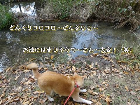024_20131127003604e5f.jpg