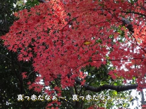 035_20131216012424450.jpg