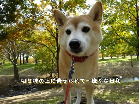 041_20131127004309a5f.jpg
