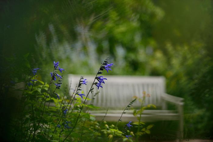 イングリッシュガーデンの木陰のベンチ