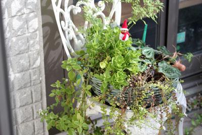 牛窓からきた観葉植物。。。。そだったわ